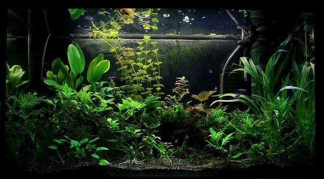 acuario agua dulce