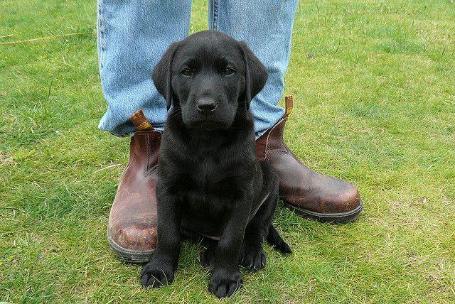 10-consejos-cachorros