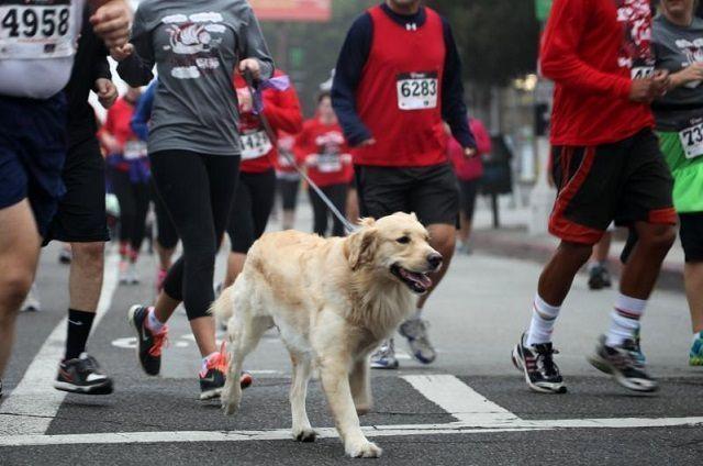 running-con-perro