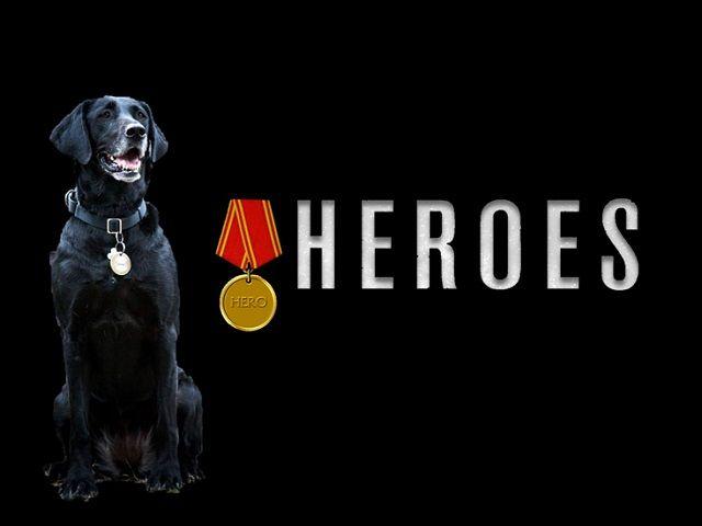 perros-heroes