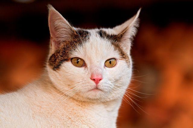 gatos- domesticos- curiosidades