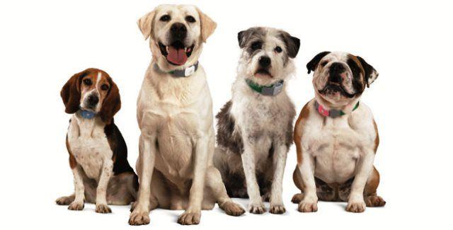 collar-perros-adiestramiento