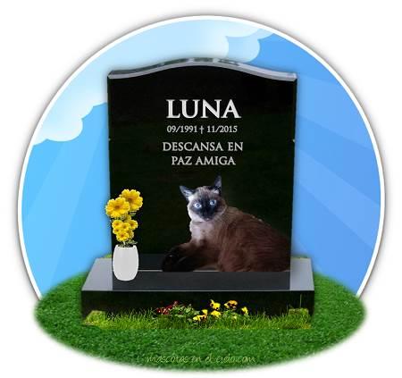 imagen recuerdo de gata luna