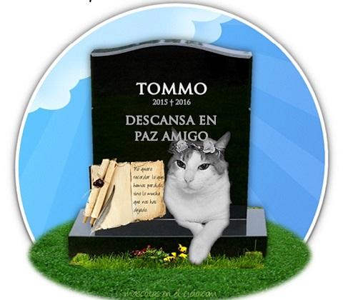 mascotas en cementerio virtual- recuerdo de tommo