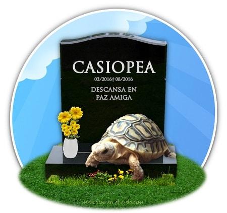 cementerio para mascotas online- recuerdo de casiopea