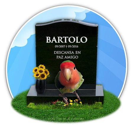 Bartolo en cementerio virtual de mascotas
