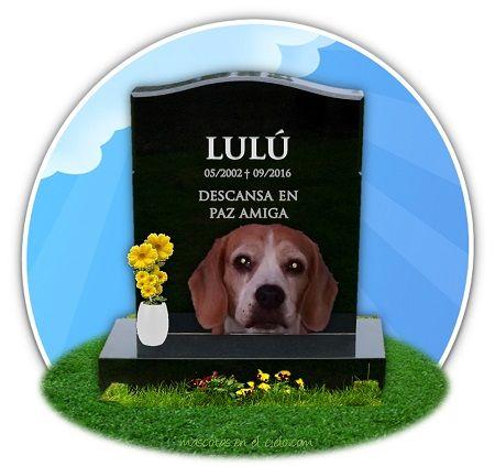 Lulu en cementerio virtual de mascotas