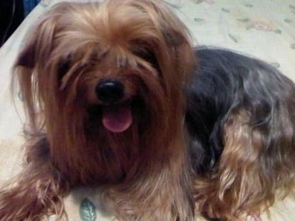 cementerio mascotas virtual- en recuerdo de scrappy