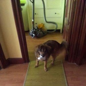 cementerio online mascotas- recuerdo de zuri